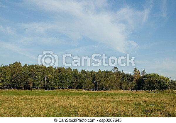 青, 草, 空, 緑 - csp0267645