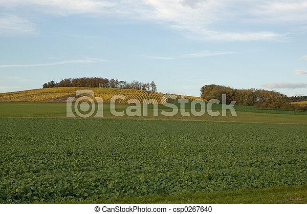 青, 草, 空, 緑 - csp0267640