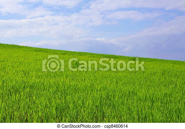 青, 草, 緑の空 - csp8460614