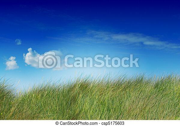 青, 飽和させられた, 側, イメージ, 空, 1(人・つ), uncutted, 緑, 背が高い草, 雲, 左 - csp5175603