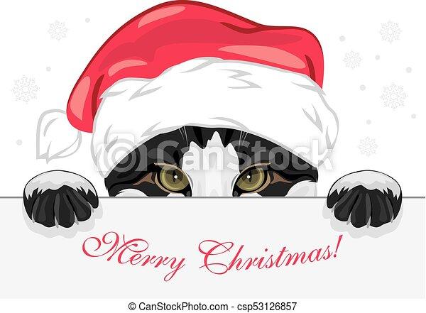 面白い 帽子 のぞくこと クリスマス ねこ 面白い のぞくこと