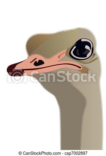 頭 ダチョウ Ostrich 頭 白い背景 イラスト