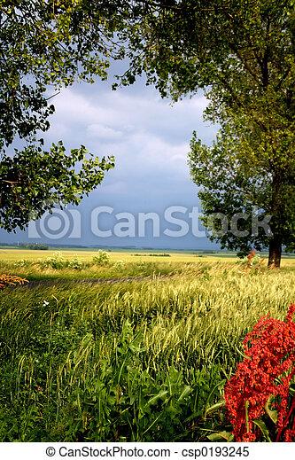 風景 - csp0193245