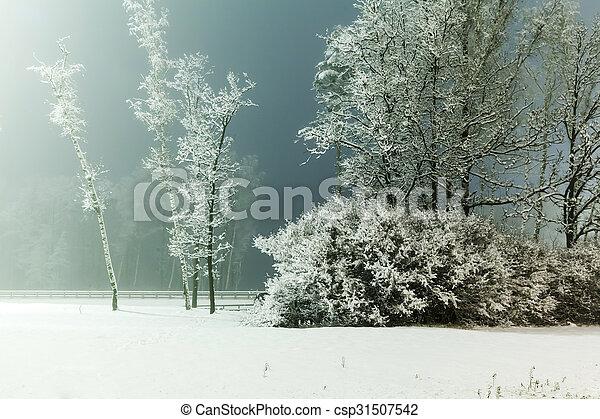 風景, 冬ツリー - csp31507542