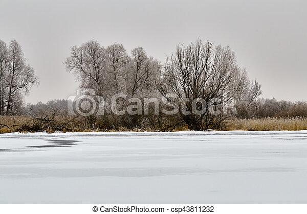 風景, 冬ツリー - csp43811232
