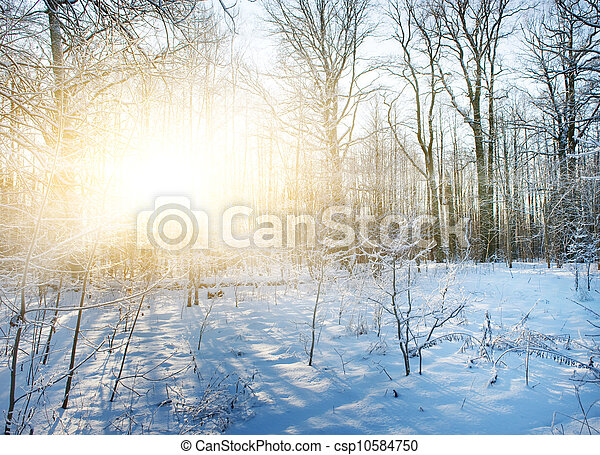 風景, 冬天, 森林 - csp10584750