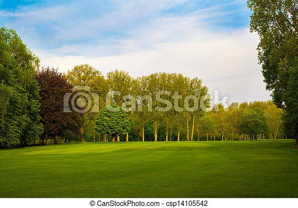 风景。, 夏天, 树, 绿色的领域, 美丽 - csp14105542