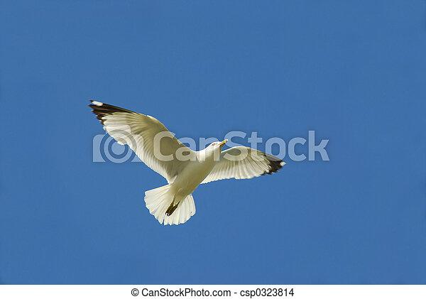 飛行の鳥 - csp0323814