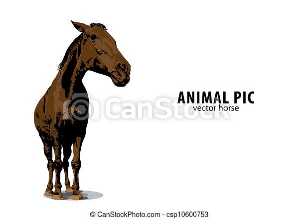 馬, ベクトル - csp10600753