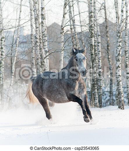 馬, 冬 - csp23543065