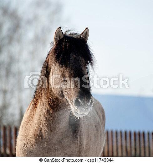 馬, 冬 - csp11743344