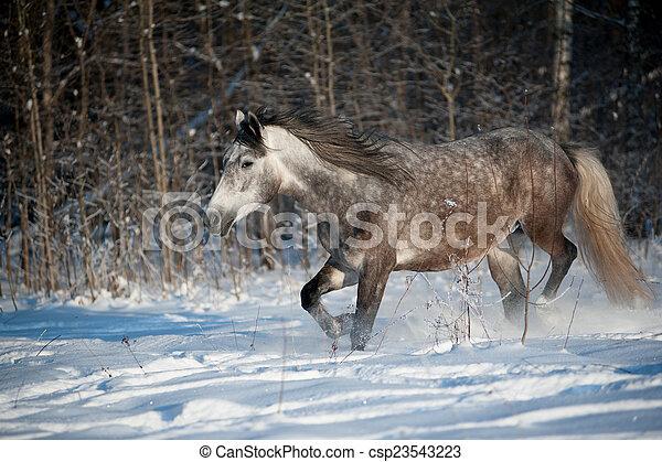 馬, 冬 - csp23543223
