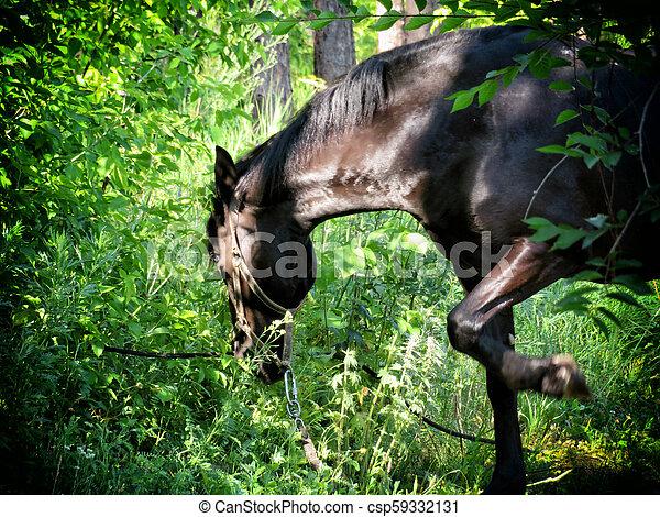 馬, 品種, 湾, 暗い, 森, 牧草 - csp59332131