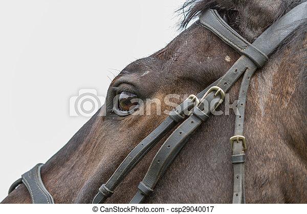 馬, 目 - csp29040017