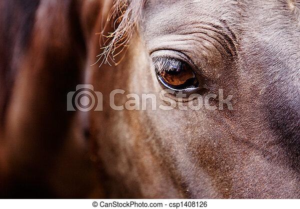 馬, 目, 細部 - csp1408126