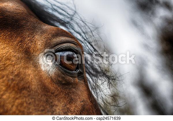 馬, 目, 細部 - csp24571639