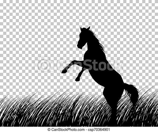 馬, 草, シルエット, 背景 - csp70364901