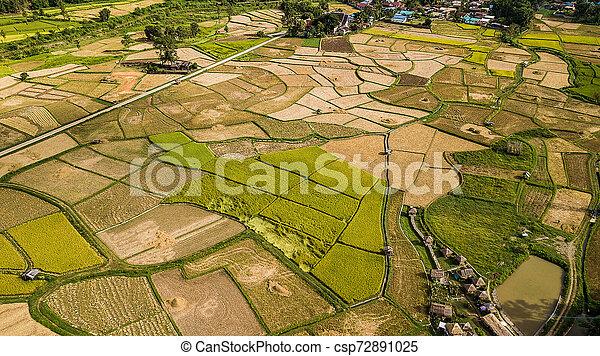 高く, フィールド, 光景, 角度, タイ - csp72891025
