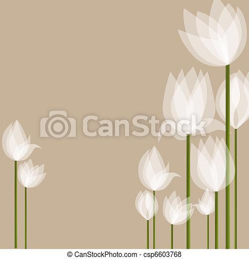 鬱金香, 白色 - csp6603768