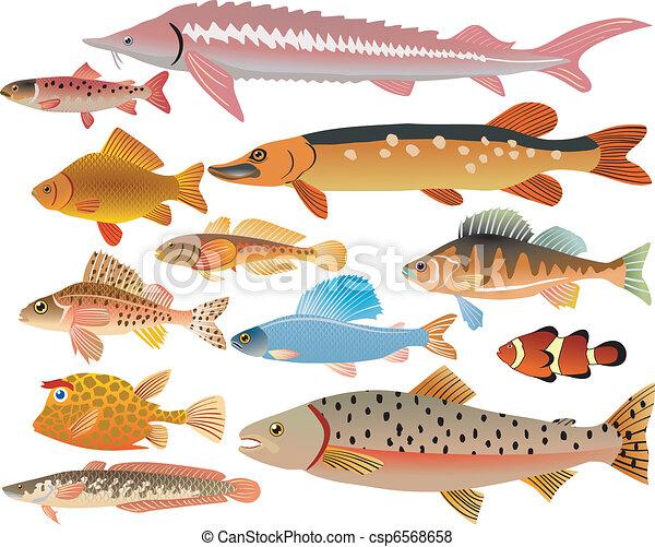 魚, セット - csp6568658