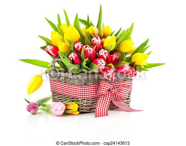 鮮艷, 被隔离, 郁金香, 籃子, 白色, 花 - csp24143613