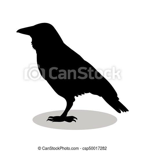 鳥, シルエット, 黒, ワタリガラス, 動物 - csp50017282