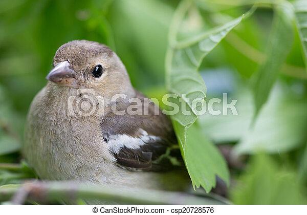 鳥 - csp20728576