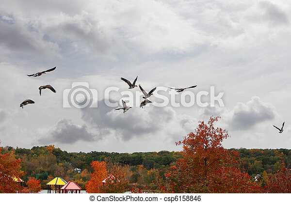 鳥, 秋 - csp6158846