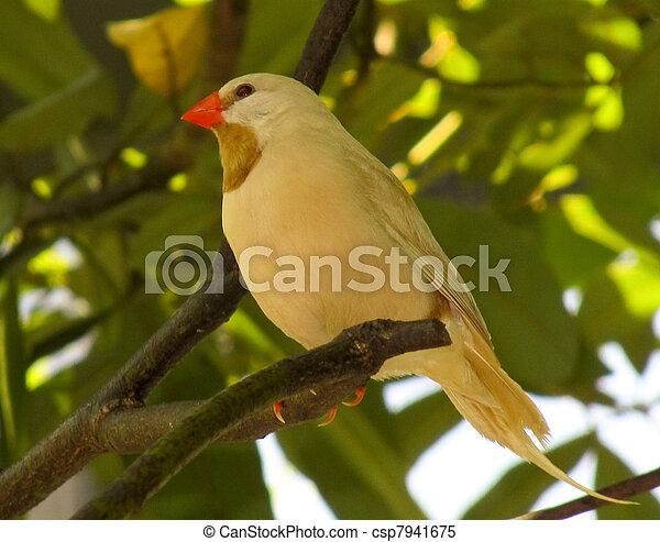 鳥, 黄色 - csp7941675