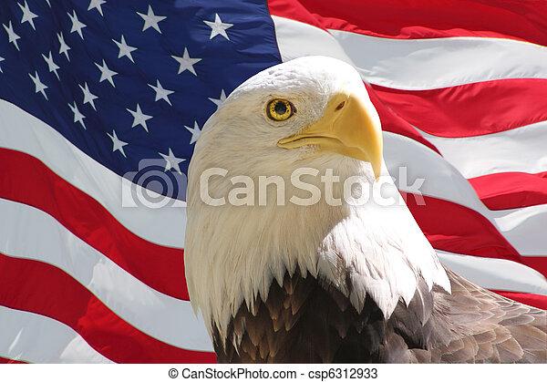 鷹, 美國人, 禿頭, 旗 - csp6312933