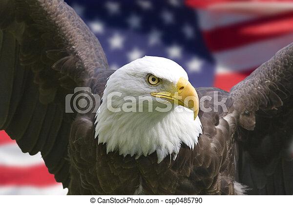 鷹, 美國旗 - csp0485790