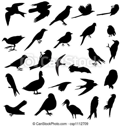 黑色半面畫像, 鳥 - csp1112709