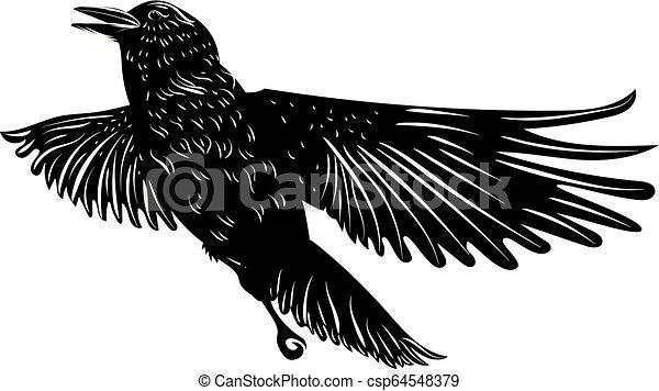 黒, シルエット, ワタリガラス - csp64548379