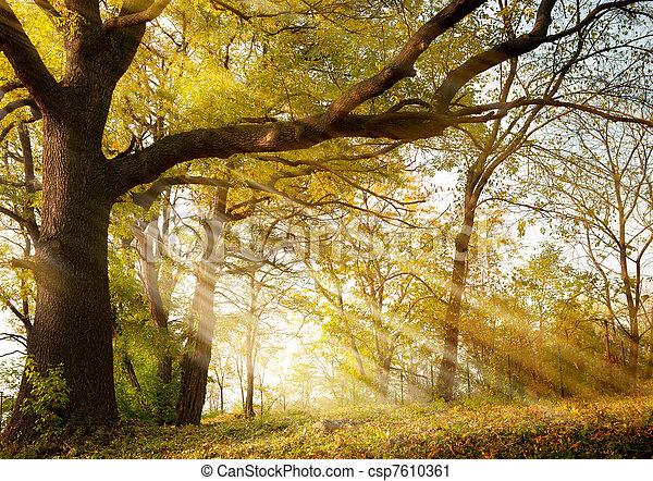 가을, 공원, 오크, 오래되었던 나무 - csp7610361