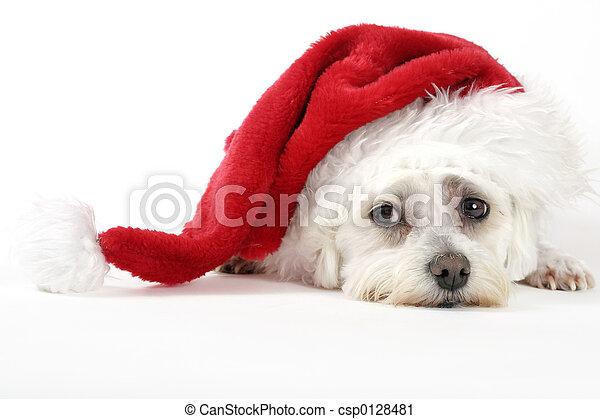 개, 크리스마스 - csp0128481