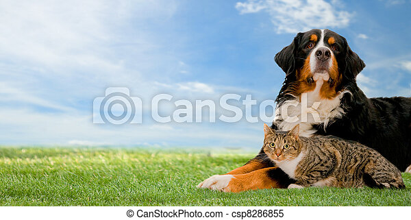 개, 함께, 고양이 - csp8286855