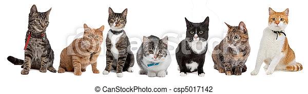 고양이, 그룹 - csp5017142
