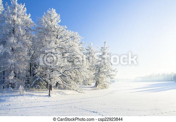공원, 눈, 겨울 - csp22923844