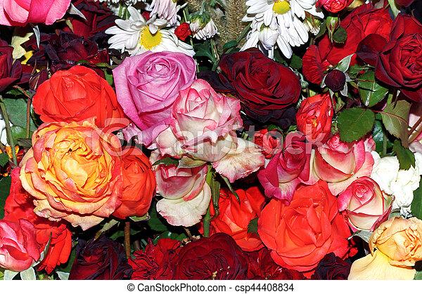 꽃다발, 크게, 장미 - csp44408834