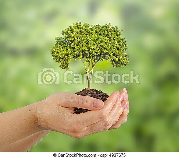 나무, 손 - csp14937675