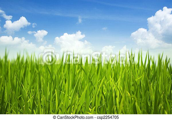 녹색 잔디, 하늘 - csp2254705