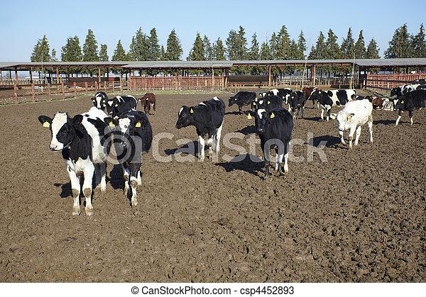 농장, 농업, 밀크 카우, 소과의 동물 - csp4452893