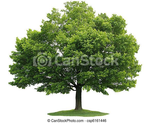 단일, 나무 - csp6161446
