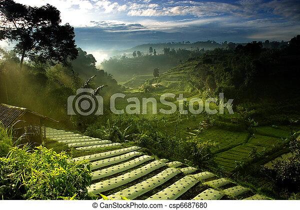 들판, 농업 - csp6687680