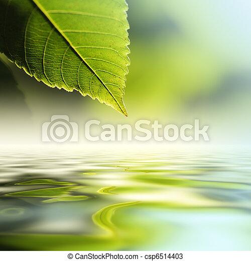 물, 위의, 잎 - csp6514403
