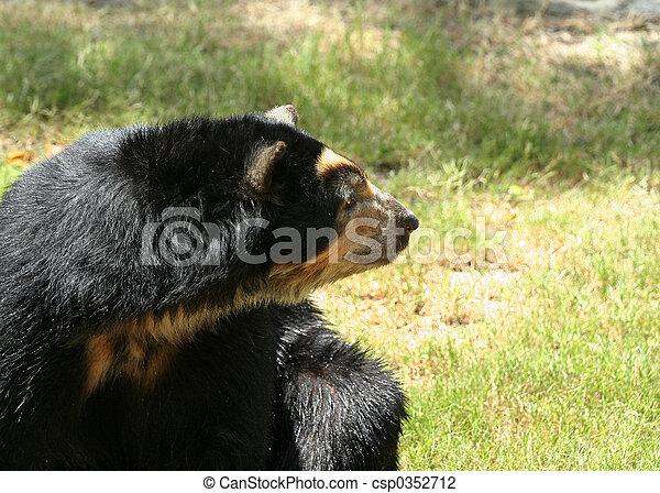 복합어를 이루어 ...으로 보이는 사람, spectacled, 쪽, 곰 - csp0352712