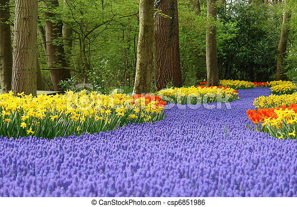 봄 꽃, keukenhof, 침대 - csp6851986