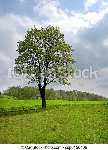 봄, 나무 - csp0158406