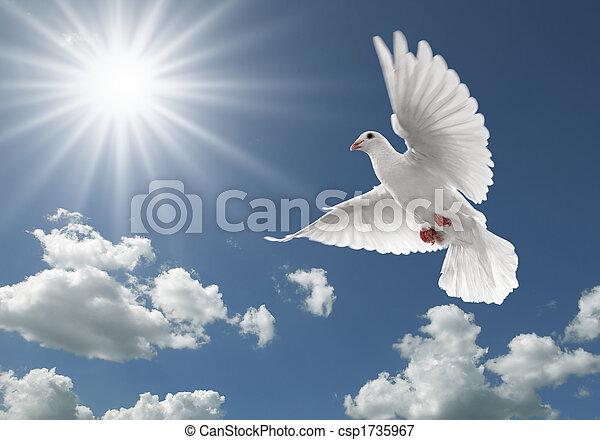 비둘기, 하늘 - csp1735967