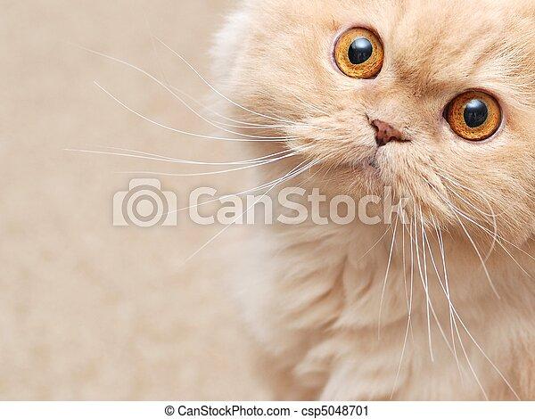 상세한 묘사, 고양이 - csp5048701